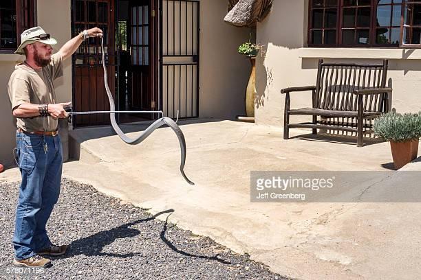 South Africa Johannesburg Croc City Crocodile and Reptile Park farm man watching employee animal handler naturalist holding mamba Dendroaspis...