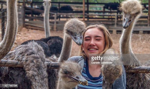 south africa, klein karoo, cango ostrich farm (model release) - klein stock pictures, royalty-free photos & images