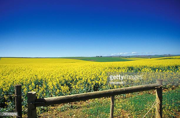 south africa, overberg, western cape, fields near heidelberg - オーバーバーグ郡 ストックフォトと画像