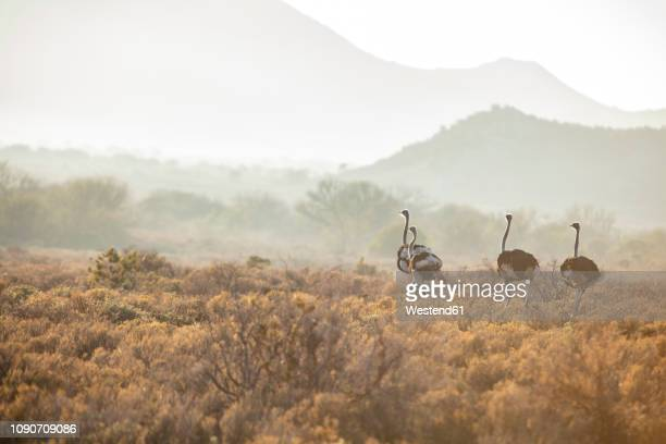 south africa, rooiberg, - limpopo province stock pictures, royalty-free photos & images