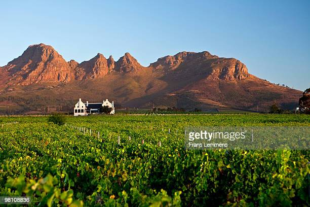South Africa, Stellenbosch, Longridge Wine Estate