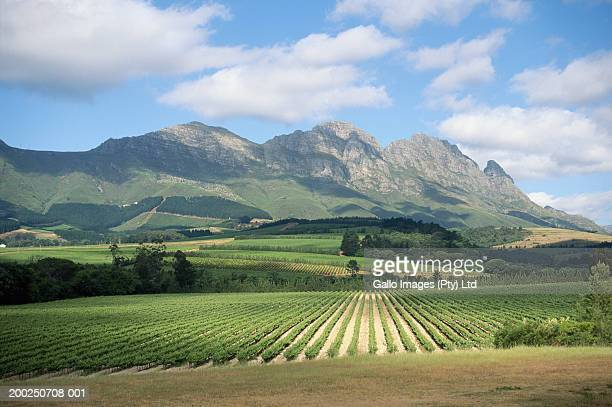 South Africa, Stellenbosch, rolling vineyards by mountains
