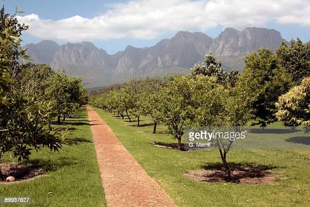 south africa vineyard and mountains - província do cabo oeste - fotografias e filmes do acervo