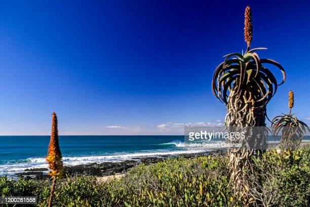 south africa, waves at jeffrey's bay - eastern cape stock pictures, royalty-free photos & images