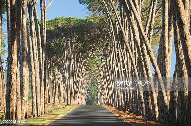 South Africa, Western Cape Province, Stellenbosch, treelined avenue