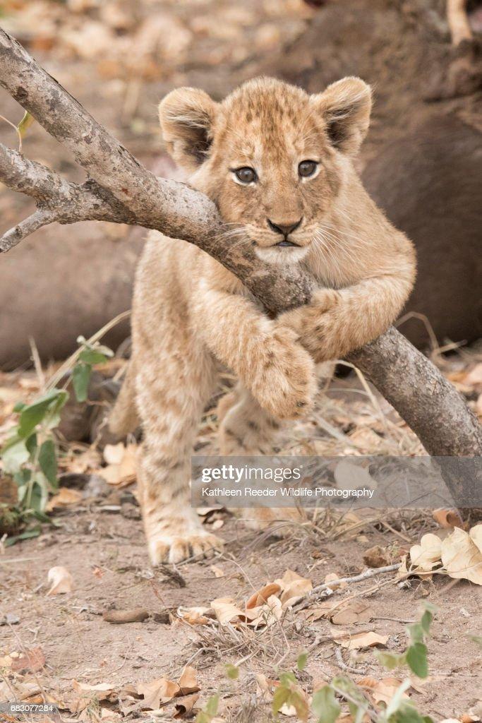 South Africa Wildlife : Stock Photo