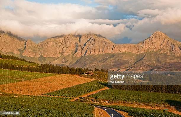 南アフリカ・ワインランドの風景