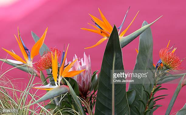 South African 'Bird of Paradise' flowers line the dias during a ceremonial welcome for South African President Jacob Zuma on Horseguards Parade on...