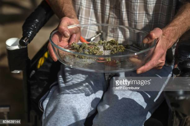 South African Gerd Bader affected by Multiple Sclerosis and who manufactures concentrated cannabis oil shows marijuana dried leaves from which he...