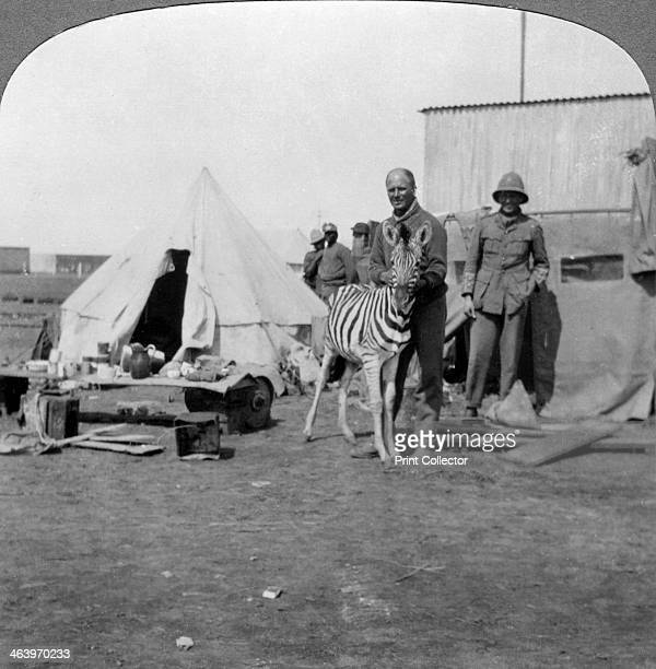 South African gunners with their pet zebra East Africa World War I 19141918 Stereoscopic card detail