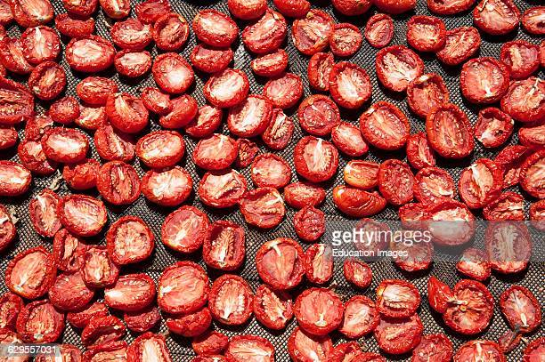South African tomatoes on racks drying in the sun