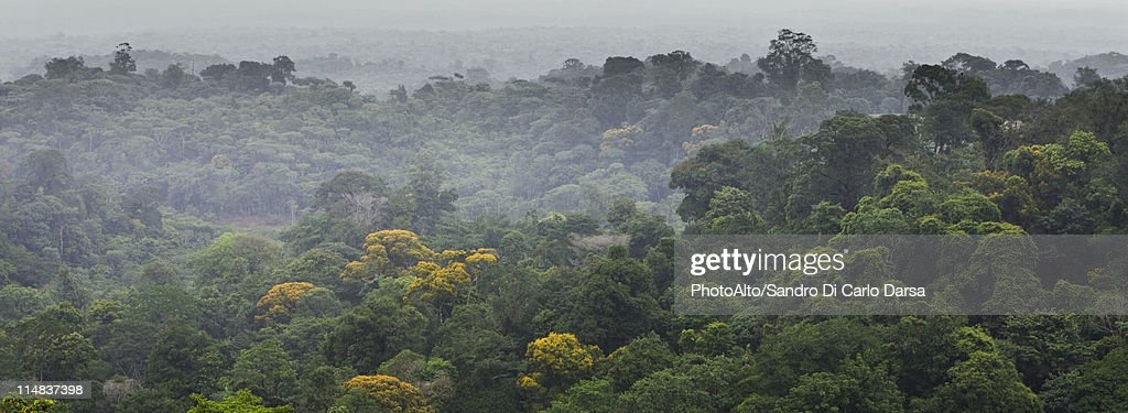 South America, Amazon Rainforest : Photo