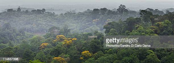 South America, Amazon Rainforest
