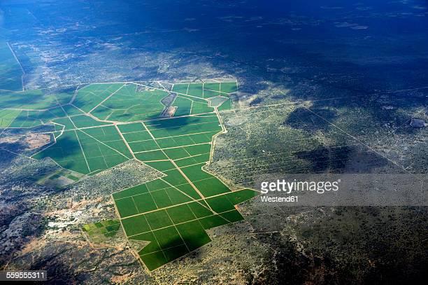 South America, Brasil, Bahia, View to sugar cane plantation, aerial view