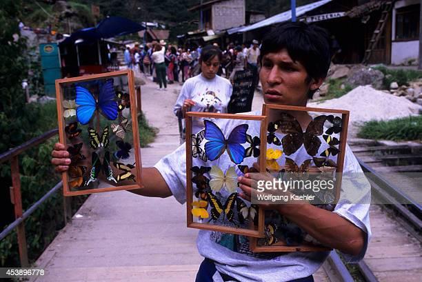 South America Peru Sacred Valley Near Machu Picchu Aguas Calientes Butterflies For Sale