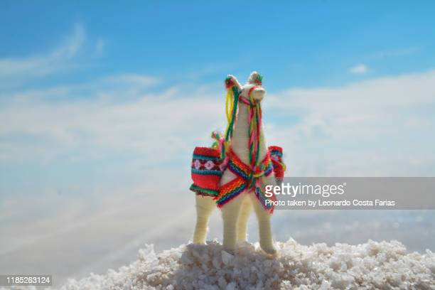 south american camelid - leonardo costa farias stock photos and pictures