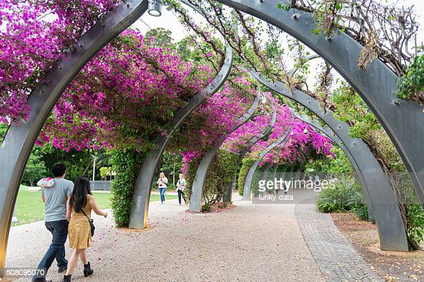 south bank arbour brisbane - brisbane stock photos and pictures