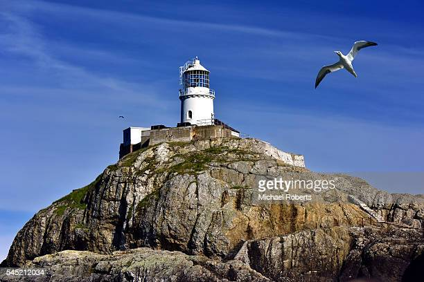 south bishop lighthouse and gannet off ramsey island in pembrokeshire. - south stock photos and pictures