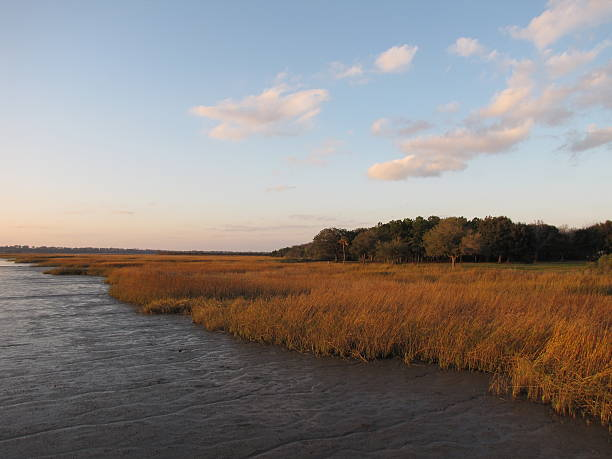 South Carolina marsh in the afternoon