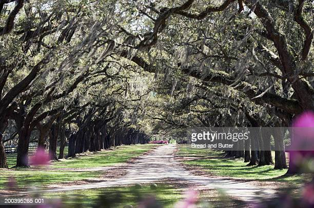 usa, south carolina, mount pleasant, boone hall plantation - boone hall plantation stock pictures, royalty-free photos & images