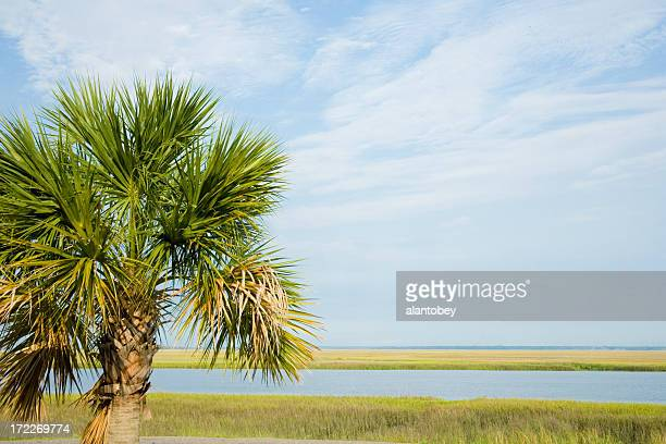south carolina, the palmetto state - salt_marsh stock pictures, royalty-free photos & images