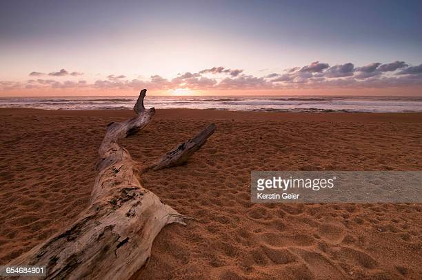 South Coast beachscape with driftwood. Bazley Beach, KwaZulu Natal, South Africa.