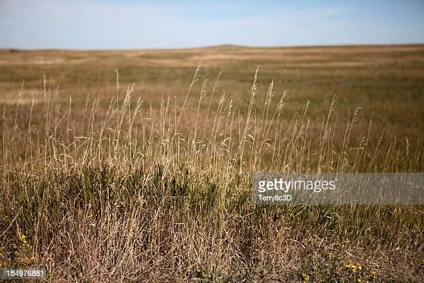 south dakota great plains, tall grass prairie field in autumn - terryfic3d bildbanksfoton och bilder