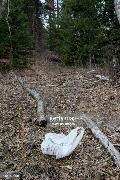 South Dakota Spearfish Canyon WalMart bag left on the ground in the forest