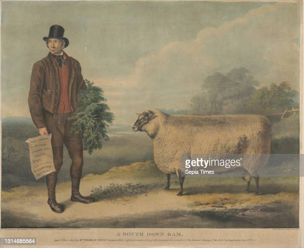 South Down Ram; Aged 3 Years, bred by Mr. Thomas Crisp, Gedgrave Hall, Suffolk, for which a Prize of 30 Severeigns was awarded at the Annual Meeting...