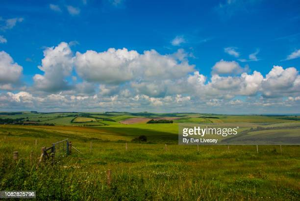south downs in summertime - national park stock pictures, royalty-free photos & images