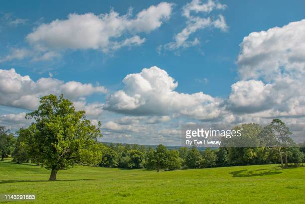 south downs in summertime - sky stock pictures, royalty-free photos & images