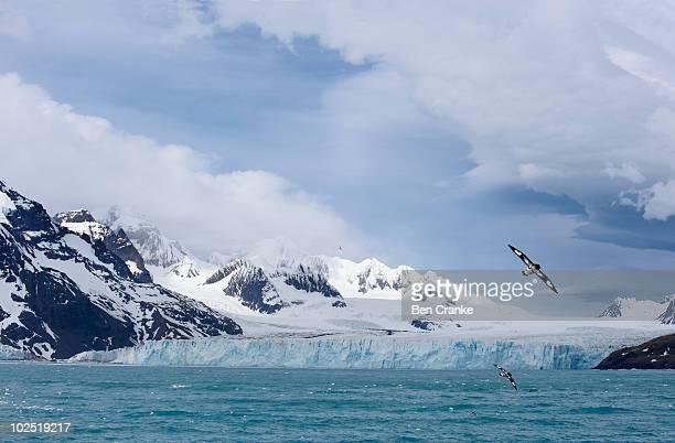south georgia glacier - zuid georgia eiland stockfoto's en -beelden