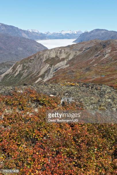 South Greenland landscape and glacier, vertical