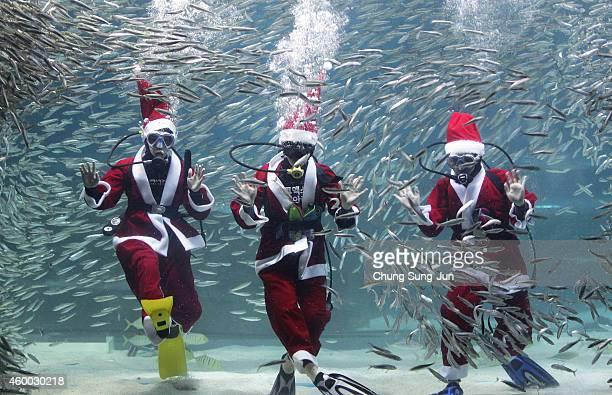 South Korean divers clad in Santa Claus costume swim with sardines at the Coex Aquarium on December 6 2014 in Seoul South Korea