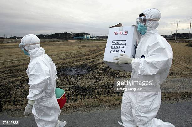 South Korean health officials conduct an investigation at a village entrance on November 26 2006 in Iksan South Korea South Korea's agriculture...