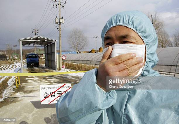 South Korean health officials place a poultry farm under quarantine on February 6 in Asan South Korea South Korean health authorities have culled...