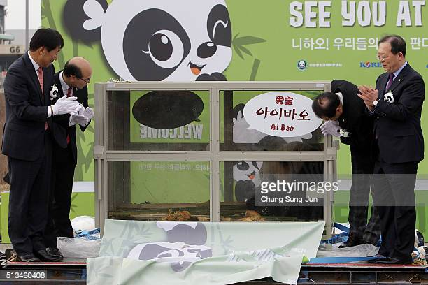 South Korean officials unveil a panda named as Aibao during a welcoming ceremony for a pair of giant pandas at the Incheon International Airport...