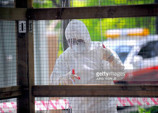 A South Korean quarantine official decontaminates a small aviary which was hit by bird flu in Seoul's Gwangjin district on May 6 2008 Bird flu has...