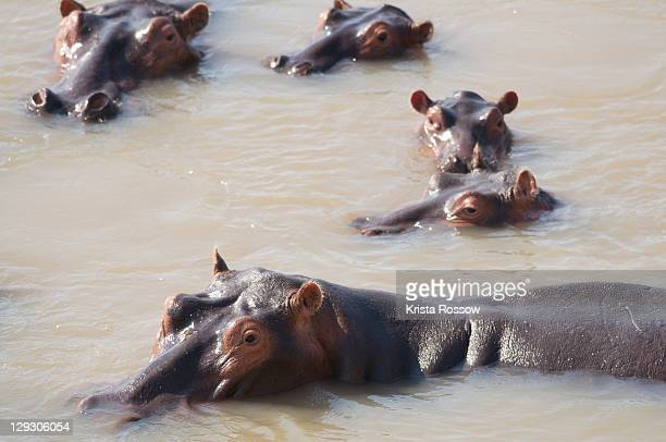 south luangwa national park, zambia. - south luangwa national park stock pictures, royalty-free photos & images
