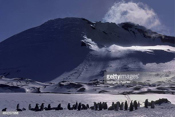 South Sandwich Islands Zavodovski Island Chinstrap Penguins At Nest Sites In Spring Which Is Still Covered With Snow