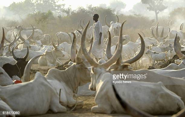 South Sudan A man from the Mundari nomad tribe stands among cattle on Jan 18 in South Sudan which became independent in July 2011