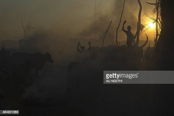 South Sudanese cattle herders stand among their animals in a field in Terekeka in the Central Equatoria state of South Sudan on April 13 2014...