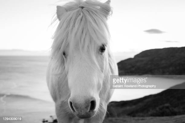 south wales horse - love magazine stock pictures, royalty-free photos & images