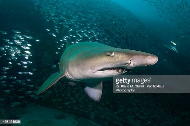 south west: rocks - nurse shark stock photos and pictures