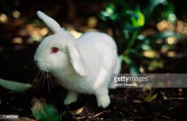 Rabbit Anatomy Stock Photos And Pictures Getty Images
