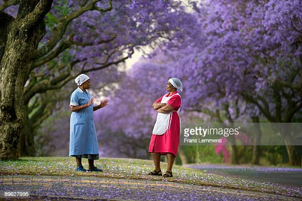 south-africa, pretoria, blooming jacaranda trees,  - pretoria stock pictures, royalty-free photos & images