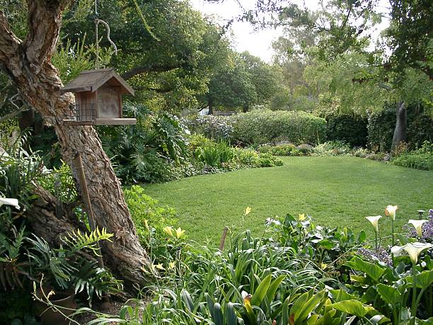 Southern California Garden