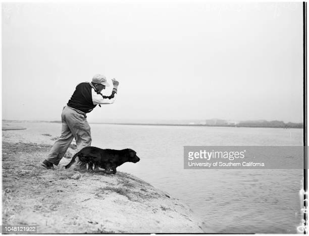 Southern California Retriever Club Incorporated, 23 September 1951. Field trial at Oxnard;Clifford Brignall;Dog 'Brignall's Nick)..