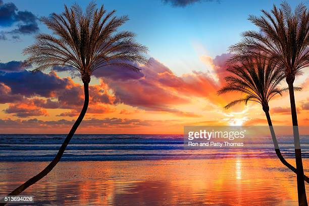 southern california sunset beach with backlit palm trees - palm tree stock pictures, royalty-free photos & images