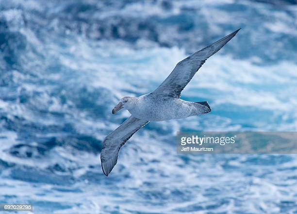 antarctica. - drake passage stock photos and pictures
